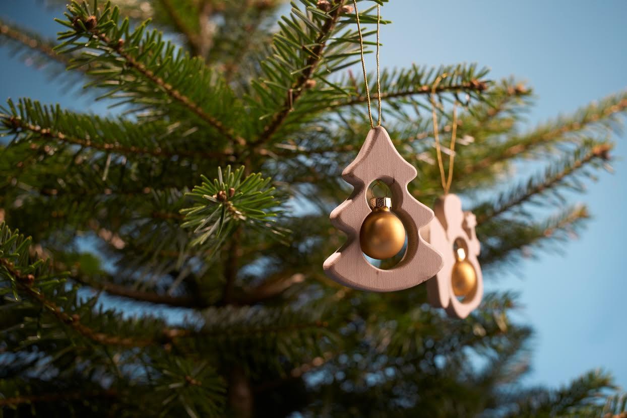 Weihnachtsbäume Mieten